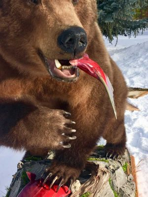 life-size-bear-taxidermy-mount-eating-fish-ray-wiens