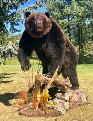 life-size-grizzly-mount-standing-on-rocks-ray-wiens
