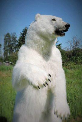 ife-size-polar-bear-mount-standing-ray-wiens
