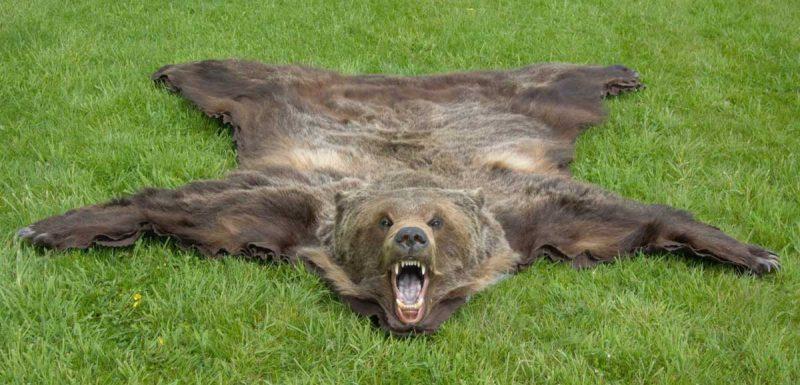 bear-rug-tanning-hides-ray-wiens2