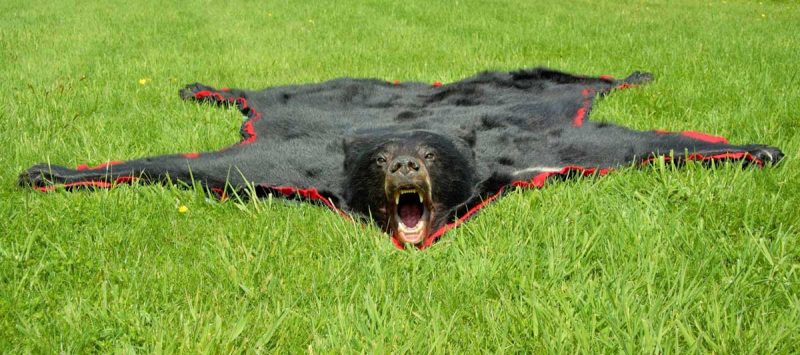 black-bear-rug-ray-wiens-tannery-taxidermy