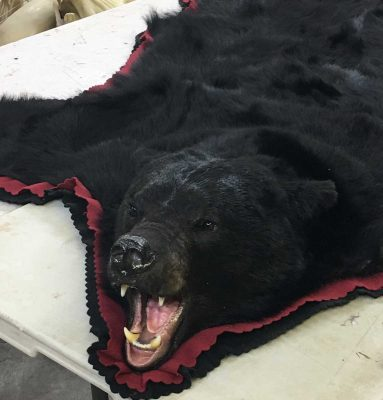 black-bear-tanning-hide-rug-ray-wiens