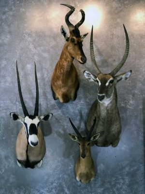exotic-species-taxidermy-ray-wiens