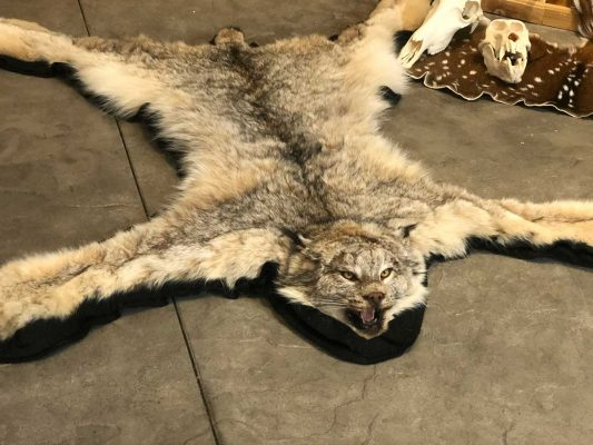lynx_rug_tanning_taxidermy_ray_wiens