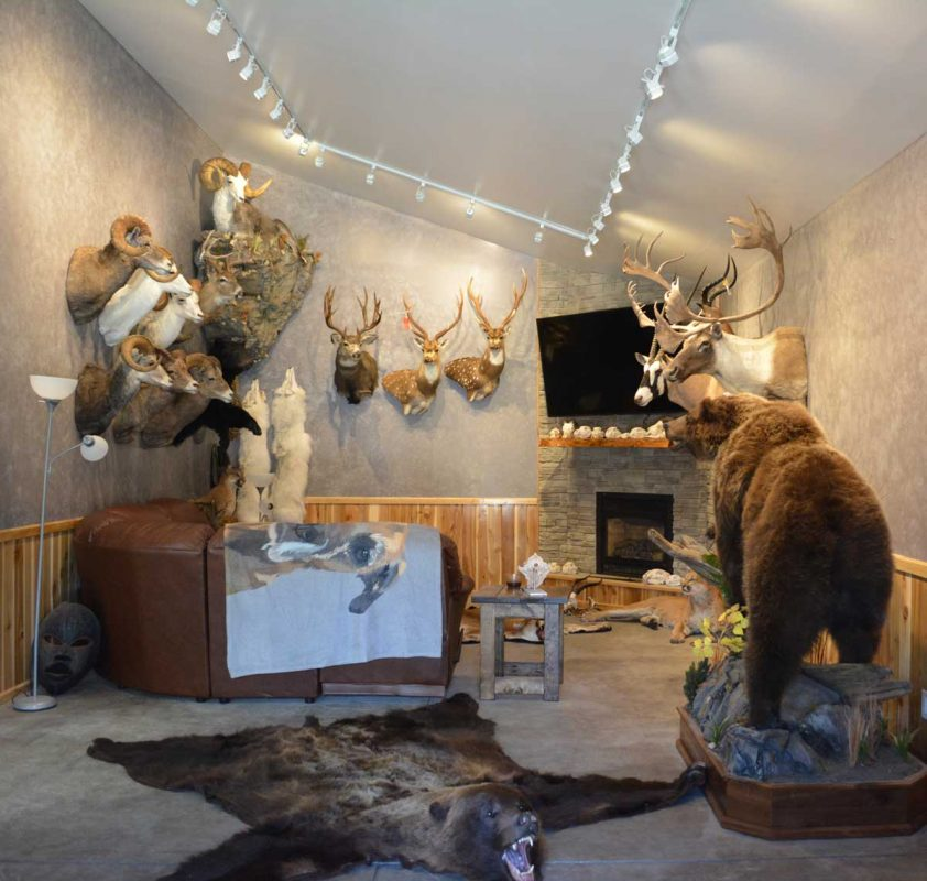 ray-wiens-taxidermy-merritt-british-columbia-trophy-room6