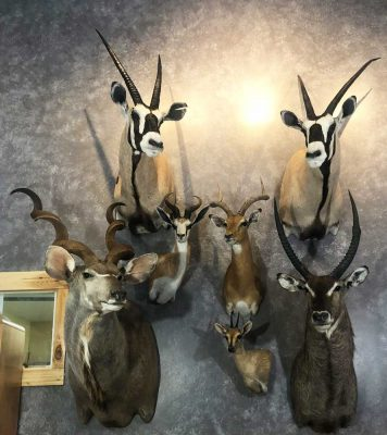 africa-exotic-taxidermy-ray-wiens-british-columbia