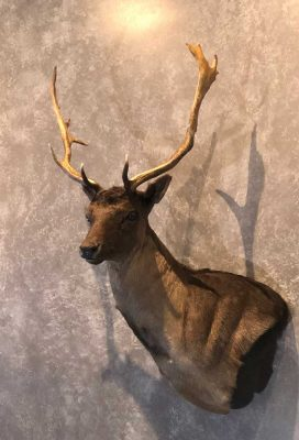 fallow-deer-taxidermy-mount-ray-wiens