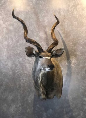 kudu-head-mount-ray-wiens-taxidermy