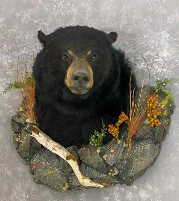 bear-shoulder-wall-mount-ray-wiens-taxidermist-bc
