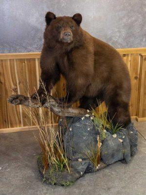 life-size-mount-bear-ray-wiens-taxidermy